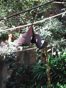Check out the wingspan on this fruit bat!